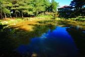 福壽山貓兒菊~藍茵湖~天池達觀亭~露營區:2U4A0280.JPG