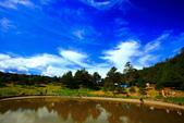 福壽山貓兒菊~藍茵湖~天池達觀亭~露營區:2U4A0330.JPG