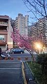 櫻花:DSC_0255.JPG