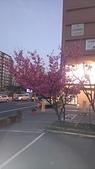 櫻花:DSC_0246.JPG