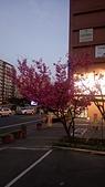 櫻花:DSC_0245.JPG
