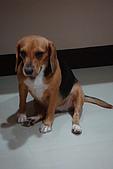 皮皮&Doggy:2008.10.18 Doggy 3.JPG