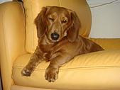 皮皮&Doggy:2009.02.26 (1).JPG