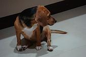 皮皮&Doggy:2008.10.18  Doggy 4.JPG