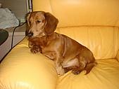 皮皮&Doggy:2009.02.06皮皮.JPG