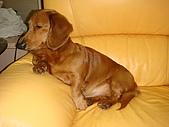 皮皮&Doggy:2009.02.06皮皮 (1).JPG