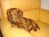 皮皮&Doggy:2009.02.06皮皮 (2).JPG