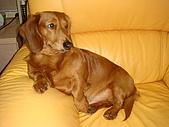 皮皮&Doggy:2009.02.06皮皮 (3).JPG