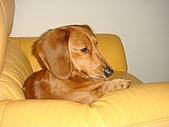 皮皮&Doggy:2009.02.06皮皮 (4).JPG