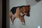 皮皮&Doggy:2008.10.18 Doggy 1.JPG