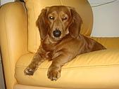 皮皮&Doggy:2009.02.26 (2).JPG