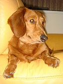 皮皮&Doggy:2009.03.13 (16).JPG