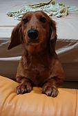 皮皮&Doggy:2008.10.18 皮皮 3.JPG