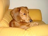 皮皮&Doggy:2009.02.06皮皮 (5).JPG