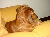 皮皮&Doggy:2009.02.06皮皮 (6).JPG
