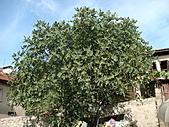 2010.09.23~2010.10.03土耳其:20100924番紅花城 (17).JPG