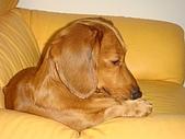 皮皮&Doggy:2009.02.06皮皮 (7).JPG