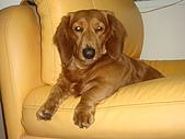 皮皮&Doggy:2009.02.26 (3).JPG