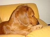皮皮&Doggy:2009.02.06皮皮 (8).JPG