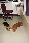 皮皮&Doggy:2008.10.19.JPG