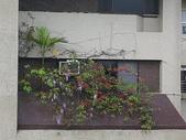 花草、果菜、鳥雀:2006.03.24