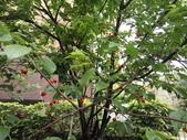 花草、果菜、鳥雀:2016.04.12-02