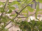 花草、果菜、鳥雀:2021.07.11-01