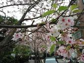 花草、果菜、鳥雀:2016.03.31-03