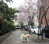 花草、果菜、鳥雀:2016.03.31-01