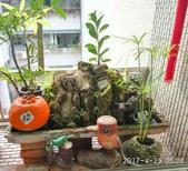 花草、果菜、鳥雀:2017.04.25-02