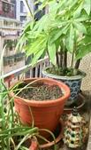 花草、果菜、鳥雀:2019.07.08-03