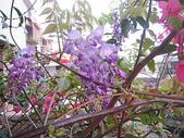 花草、果菜、鳥雀:2006.03.27