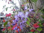 花草、果菜、鳥雀:2006.03.17