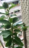 花草、果菜、鳥雀:2021.05.20-01
