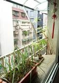 花草、果菜、鳥雀:2016.10.22-03