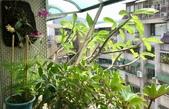 花草、果菜、鳥雀:2018.05.22