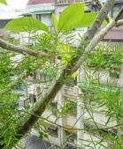 花草、果菜、鳥雀:2017.06.13-02