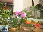 花草、果菜、鳥雀:2006.03.29