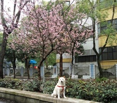 花草、果菜、鳥雀:2016.03.13-01