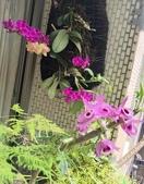 花草、果菜、鳥雀:2019.05.19