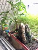花草、果菜、鳥雀:2018.11.26