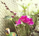 花草、果菜、鳥雀:2016.05.23