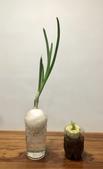 花草、果菜、鳥雀:2020.03.11-01