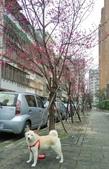 花草、果菜、鳥雀:2016.02.19-01