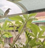 花草、果菜、鳥雀:2021.07.11-04