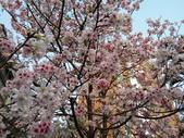 花草、果菜、鳥雀:2016.04.02-02