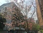 花草、果菜、鳥雀:2018.03.19-02
