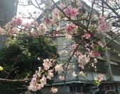 花草、果菜、鳥雀:2018.03.19-03
