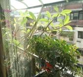 花草、果菜、鳥雀:2017.06.13-01