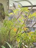 花草、果菜、鳥雀:2021.09.18-01